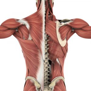 muscoli tapis roulant